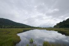 尾瀬の湿原の画像001