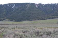 平原にいるアメリカバイソンの群れの画像001
