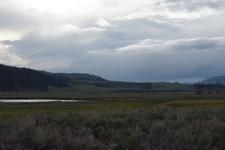 平原にいるアメリカバイソンの群れの画像002