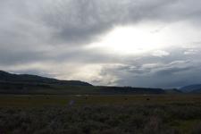 平原にいるアメリカバイソンの群れの画像003