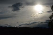 イエローストーン国立公園のアメリカバイソンの画像027
