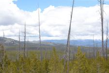 イエローストーン国立公園の山火事で焼けた木々の画像001