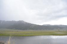 平原にいるアメリカバイソンの群れの画像006