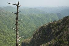 瓶ヶ森の山の画像020