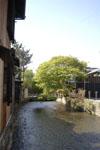 京都祇園の桜の画像003
