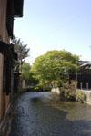 京都祇園の桜の画像004
