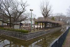 小金井公園の画像006