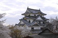 彦根城と満開の桜の画像007