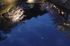 彦根城のお堀と満開の夜桜の画像002