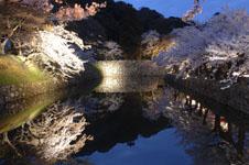 彦根城のお堀と満開の夜桜の画像003