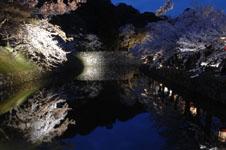 彦根城のお堀と満開の夜桜の画像004