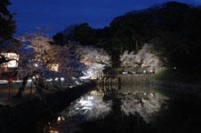 彦根城のお堀と満開の夜桜の画像005