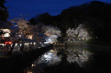 彦根城のお堀と満開の夜桜の画像006