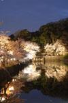 彦根城のお堀と満開の夜桜の画像007