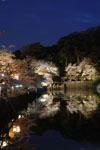 彦根城のお堀と満開の夜桜の画像008