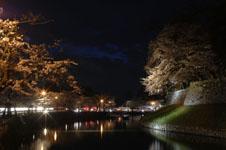 彦根城のお堀と満開の夜桜の画像009