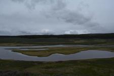 イエローストーン国立公園の湿原の画像007