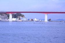 三崎の海の画像012