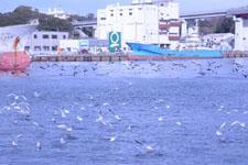 三崎の海の画像013