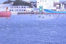 三崎の海の画像014