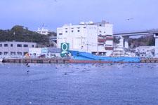 三崎の海の画像015