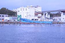 三崎の海の画像016