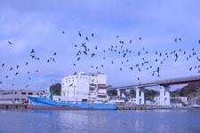 三崎の海の画像017