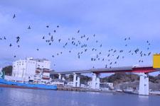 三崎の海の画像018