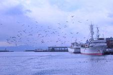 三崎の海の画像019