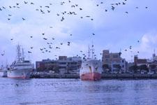 三崎の海の画像020