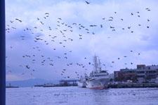 三崎の海の画像021