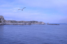 三崎の海の画像028