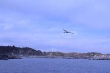 三崎の海の画像030