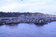 三崎の海の画像034