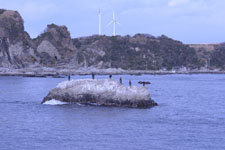 三崎の海の画像035