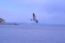 三崎の海の画像037