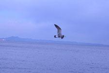 三崎の海の画像038