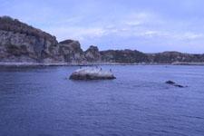 三崎の海の画像040