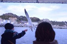 三崎の海の画像043