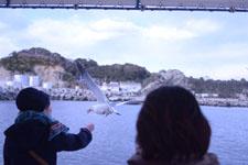 三崎の海の画像044