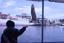 三崎の海の画像046