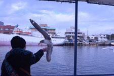 三崎の海の画像047