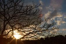 三崎の夕暮れの画像004