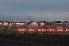 三崎の河津桜の画像023