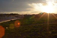 三崎の夕暮れの画像011