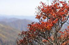 瓶ヶ森の紅葉の画像024