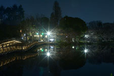 井の頭恩賜公園の満開の夜桜の画像027