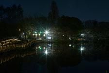 井の頭恩賜公園の満開の夜桜の画像029