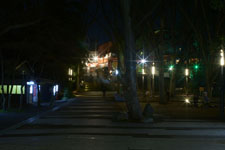井の頭恩賜公園の満開の夜桜の画像035