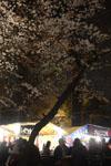 千鳥ヶ淵の満開の夜桜の画像015